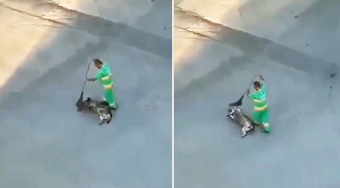 sweeper-and-stray-dog-bond