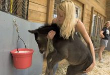 woman-effort-rescue-foals