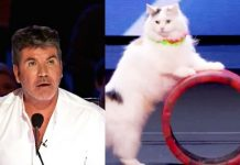 cats-talent-on-agt