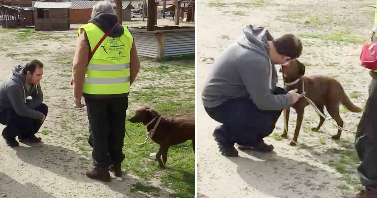 dog-reunion-with-owner