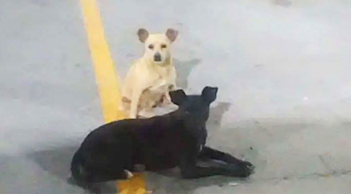 dogs-asking-for-help