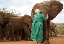grandma-raising-baby-elephants