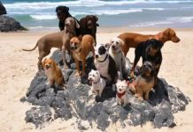 happy-dogs-and-cats-on-beach