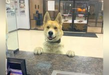 lost-dog-report-himself-to-police