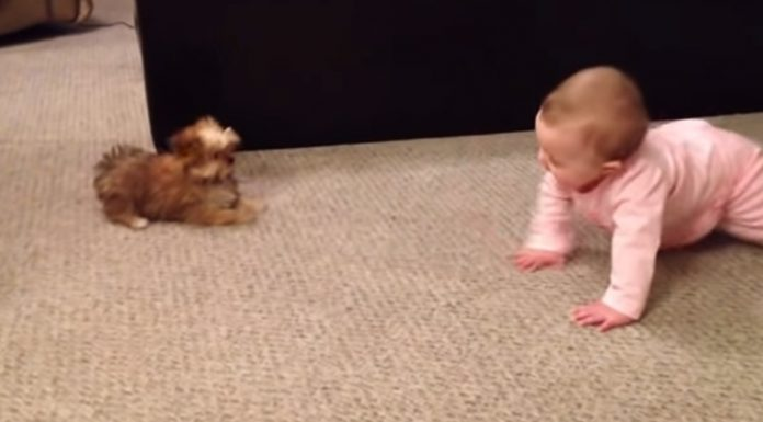 talk-between-puppy-and-baby