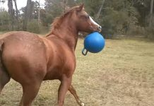 buster-the-horse-playing