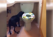 doggie-bathroom