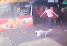 man-kicks-dog-karma