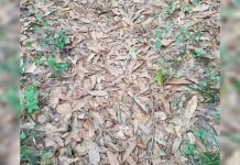 camouflaged-snake-in-photo