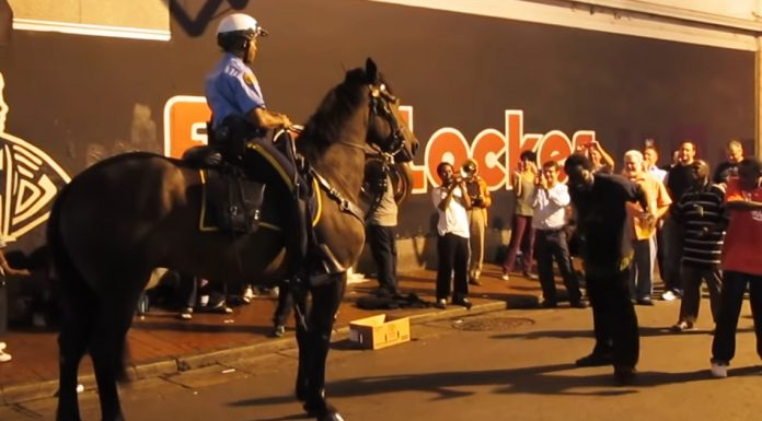 police-horse-dance-moves
