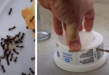 trick-to-get-rid-of-ants