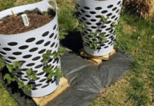 baskets-as-strawberry-planters