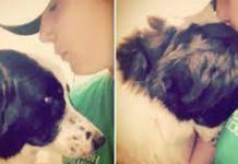 dog-clings-to-rescuer