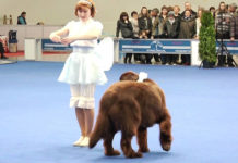 dog-show-in-russia