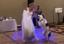 first-dance-with-dog