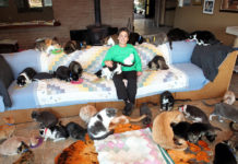 lady-who-lives-with-1000-cats