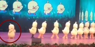 Duck Dancer forgets to Leave Stage