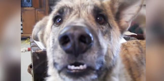 frastrated-talking-dog-voice-over