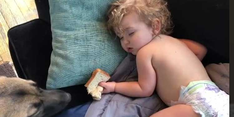 Dog Tries to Steal Sandwich From Sleeping Toddler