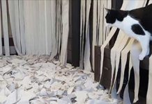 cat-playing-with-TP