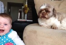 Baby-argues-with-Dog