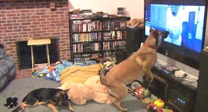 Dog Has The Best Reaction