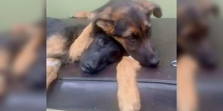 Puppy Hugs And Comforts
