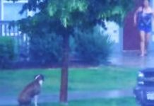 dog-in-thunderstorm-saved