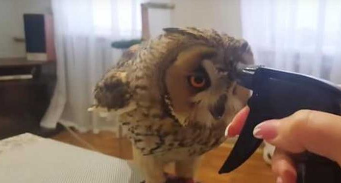 owl-quench-his-thirst