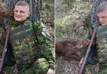 Baby-Moose-Approaches-Soldier