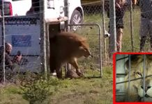 Lion Was Rescued circus