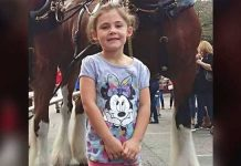 little-girl-and-Clydesdale