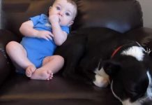 pooping-baby-and-dog