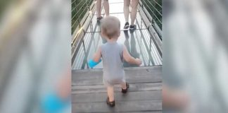 Toddler Attempts To Cross Glass Bridge But Makes Up His Own Mind
