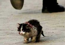 ugly-cat-img